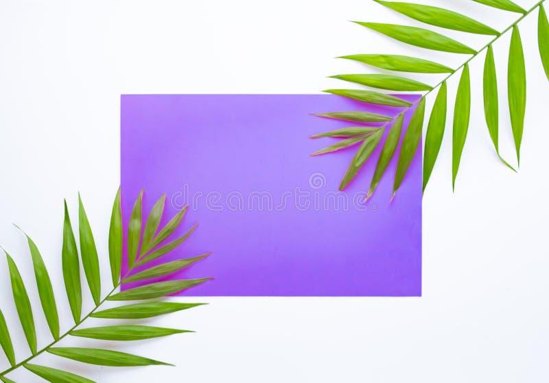 Hojas de palma tropicales en lila y fondo p?rpura Concepto m?nimo Verano en estilo Hoja de palma Plantas tropicales Endecha plana imagen de archivo