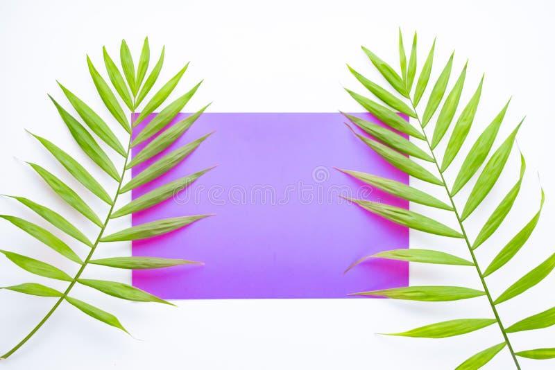 Hojas de palma tropicales en lila y fondo p?rpura Concepto m?nimo Verano en estilo Hoja de palma Plantas tropicales Endecha plana fotografía de archivo