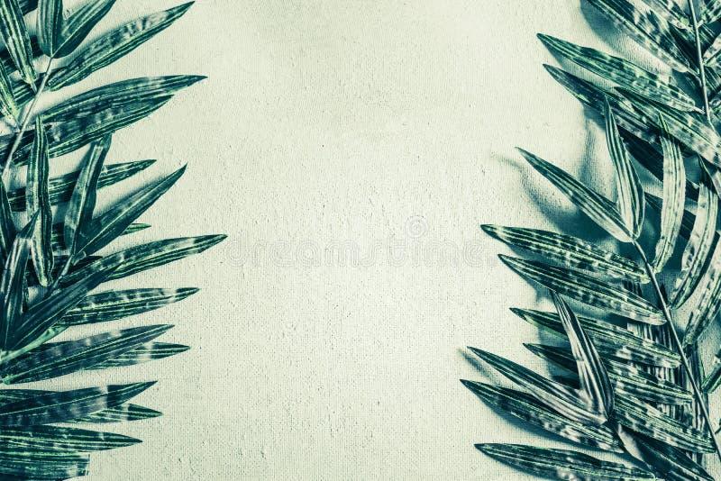 Hojas de palma tropicales en marco verde claro del fondo imagen de archivo libre de regalías