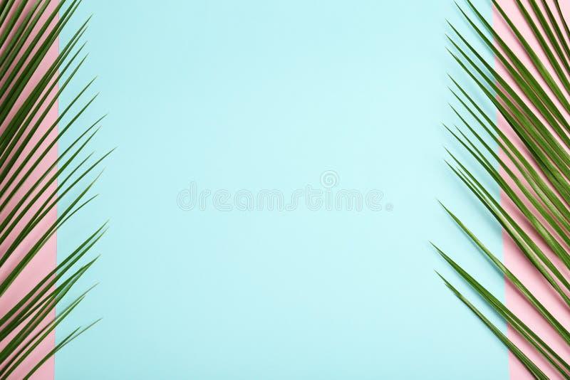 Hojas de palma tropicales frescas de la fecha foto de archivo libre de regalías