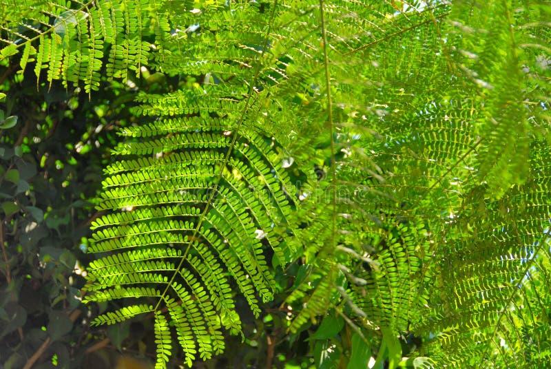 Hojas de palma verdes fotos de archivo