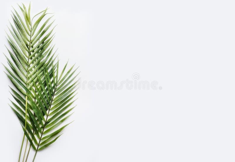 Hojas de palma verdes en el fondo blanco de la tabla, visión superior, lugar para el texto imagen de archivo libre de regalías