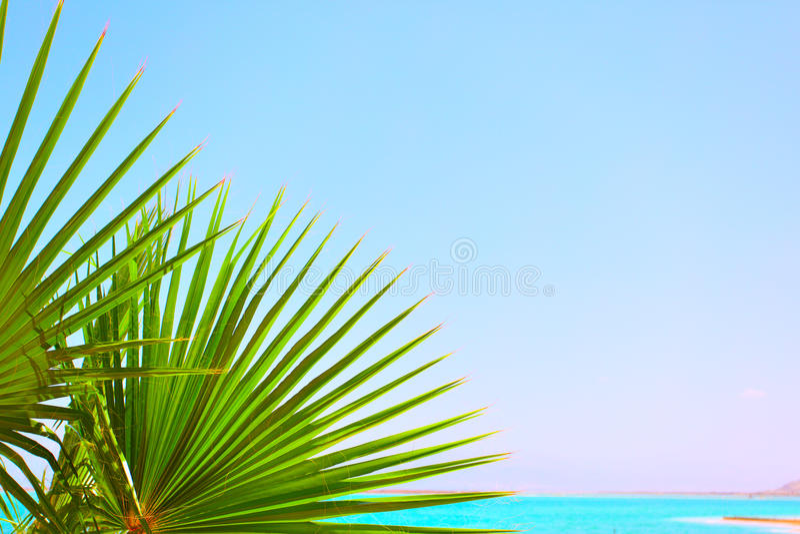 Hojas de palma y mar foto de archivo