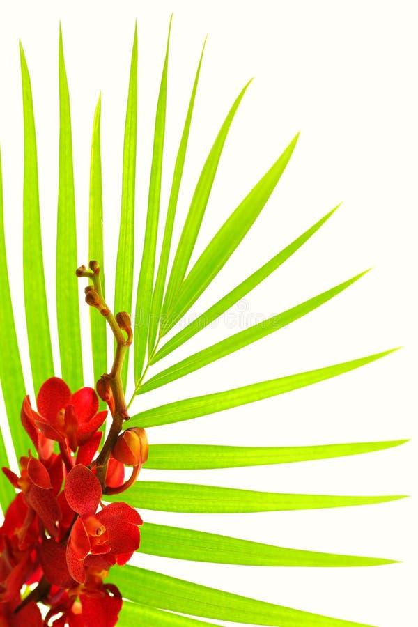Hojas de palma y orquídea roja fotografía de archivo libre de regalías
