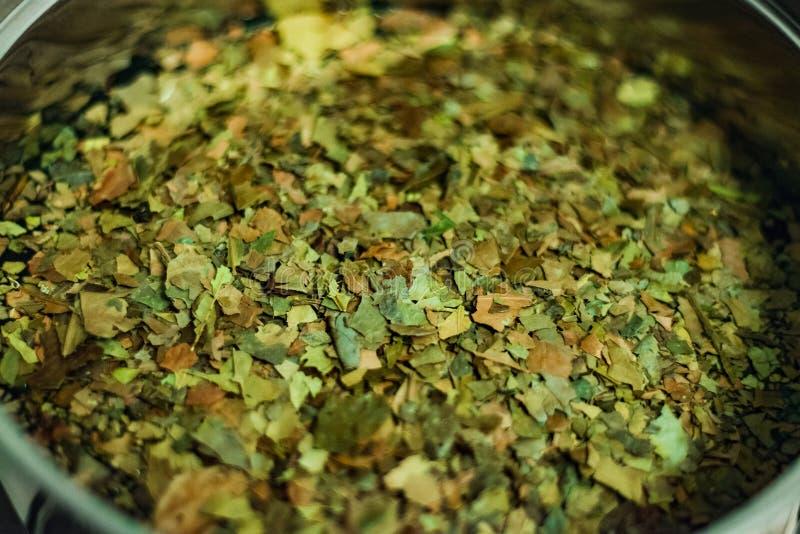 Hojas de té de Ayahuasca Guayusa de la selva tropical del Amazonas, preparación que elabora cerveza en una caldera, primer fotos de archivo libres de regalías