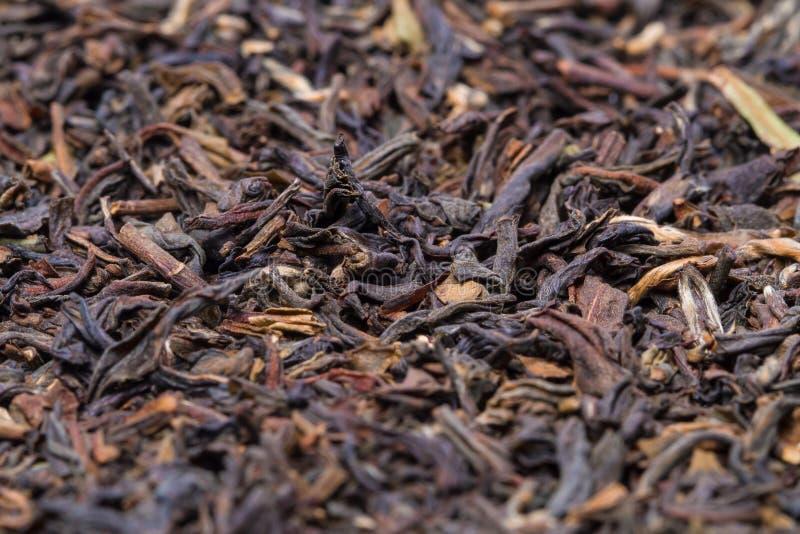 Hojas de té de darjeeling fotografía de archivo