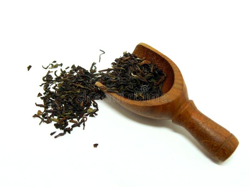 Hojas de té flojas imagen de archivo
