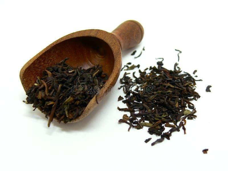 Hojas de té flojas foto de archivo libre de regalías