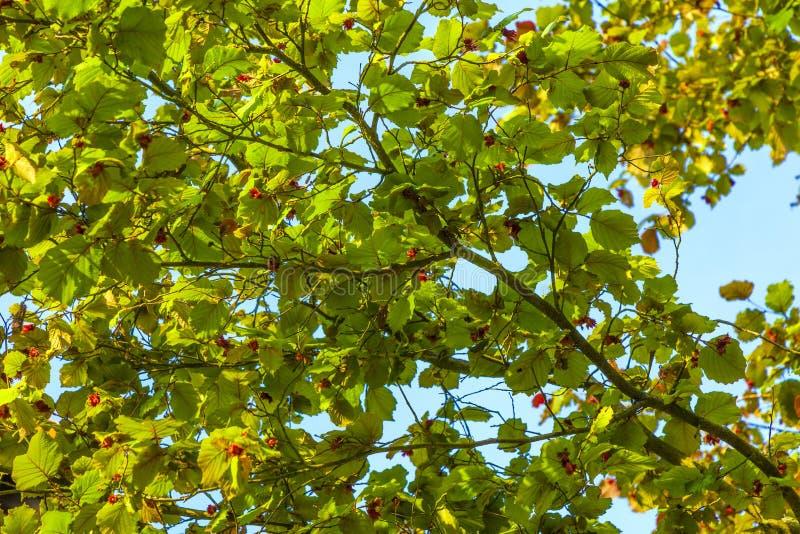 Hojas de un árbol detalladamente foto de archivo libre de regalías