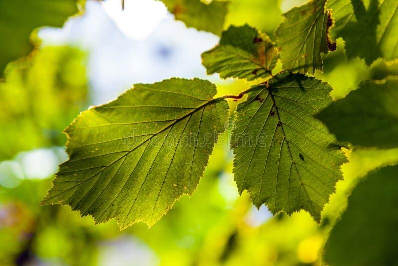Hojas de un árbol detalladamente imagenes de archivo