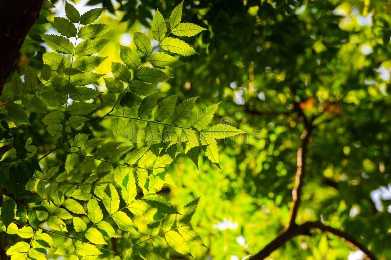 Hojas de un árbol en una luz del sol imágenes de archivo libres de regalías