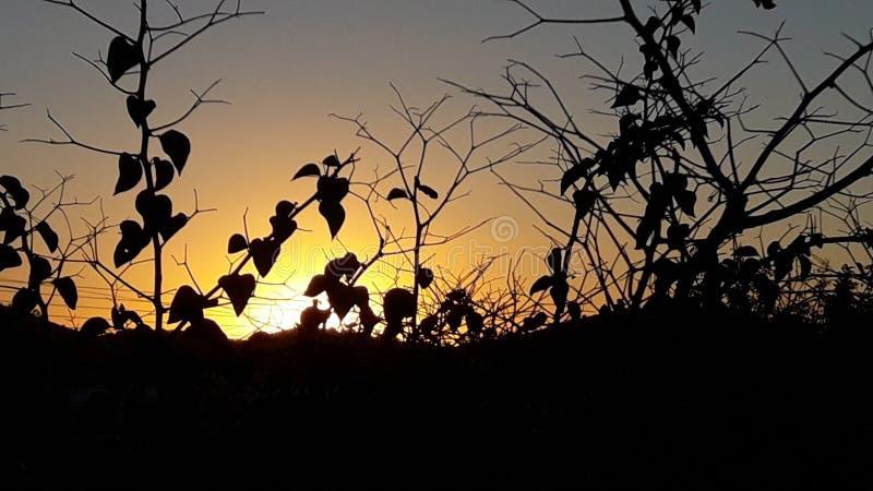 Hojas del árbol del fondo de la salida del sol de la puesta del sol en frente foto de archivo libre de regalías