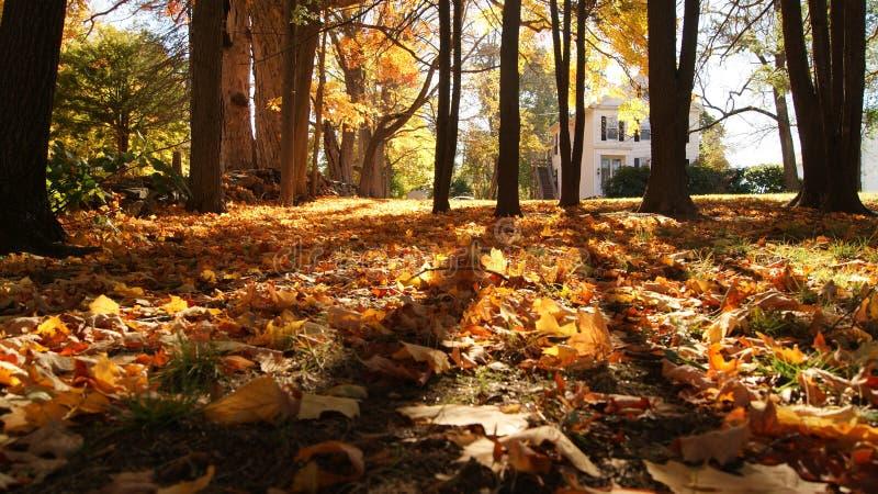 Hojas del amarillo anaranjado y del rojo de la caída de Autum entre la sombra de los árboles en una pequeña ciudad en Nueva Ingla fotos de archivo libres de regalías