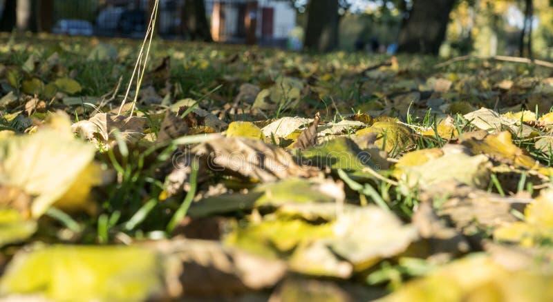 Hojas del amarillo en la hierba foto de archivo