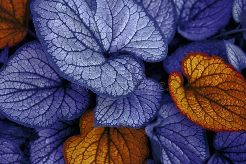 Hojas del azul y de la naranja imagenes de archivo