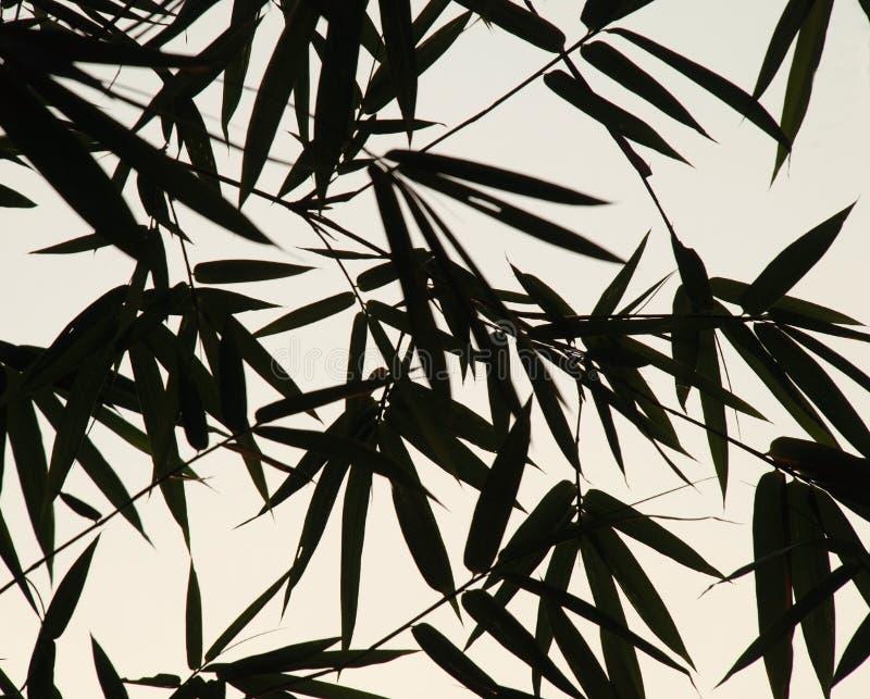 Hojas del bambú   ilustración del vector