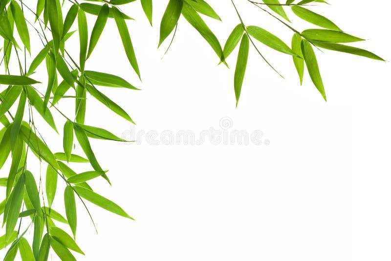 Hojas del bambú foto de archivo libre de regalías