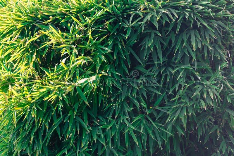 Hojas del bambú imágenes de archivo libres de regalías