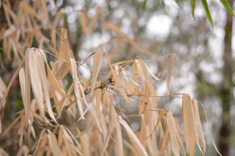 Hojas del bambú en el árbol de bambú imagen de archivo libre de regalías