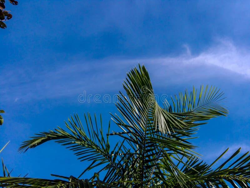 Hojas del cielo azul y del verde imagen de archivo