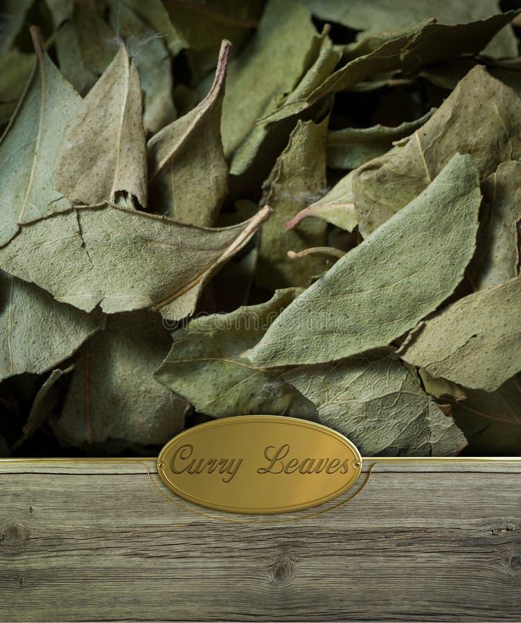 Hojas del curry etiquetadas foto de archivo