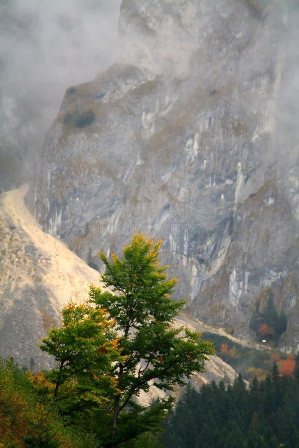Hojas del día y del amarillo del otoño imagen de archivo libre de regalías