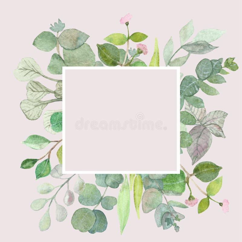 Hojas del eucalipto en el fondo blanco Capítulo hecho de ramas del eucalipto Endecha plana, visión superior, espacio de la copia stock de ilustración