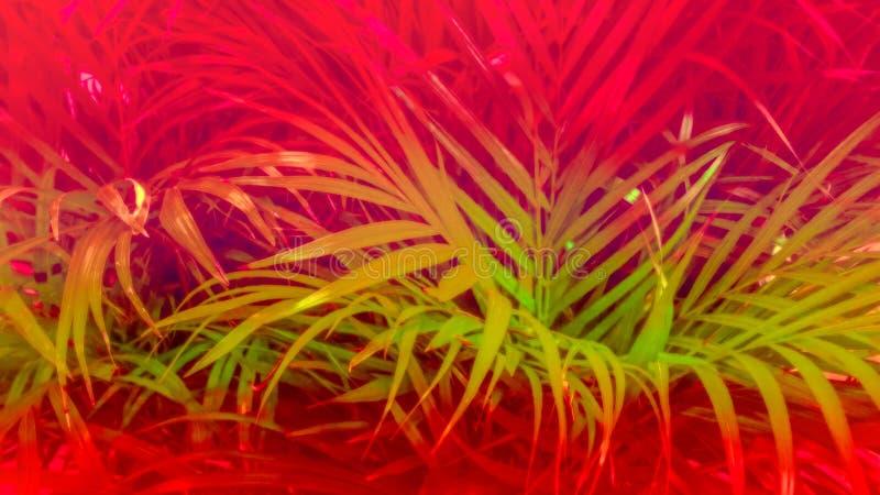 Hojas del helecho, palmeras en el color rojo y verde fotografía de archivo libre de regalías