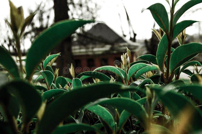 Hojas del invierno foto de archivo