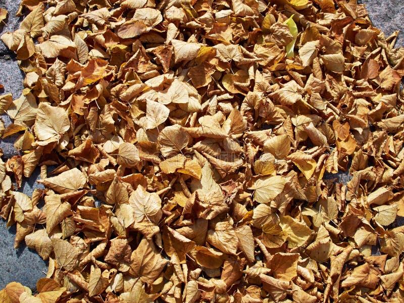 Hojas del invierno del otoño imágenes de archivo libres de regalías