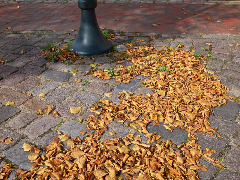 Hojas del invierno del otoño imagen de archivo libre de regalías