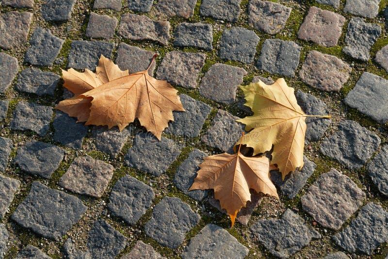 Hojas del invierno del otoño fotos de archivo