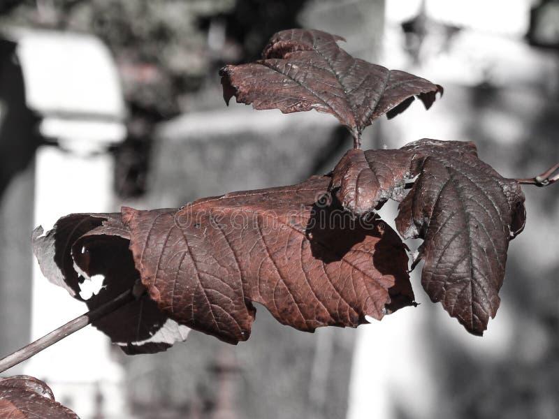 Hojas del invierno en cementerio imagenes de archivo