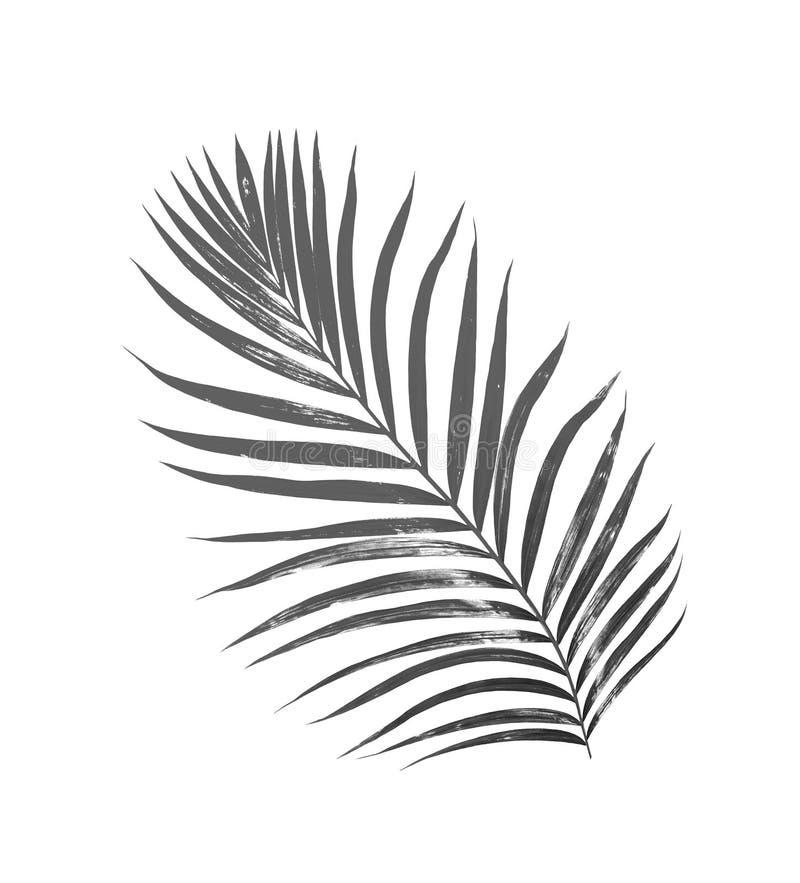 Hojas del negro de la palmera imagen de archivo libre de regalías