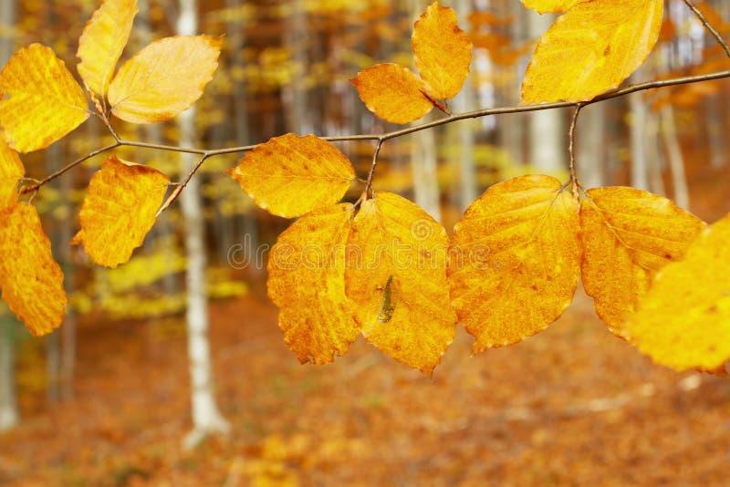 Hojas del otoño en el bosque imagen de archivo