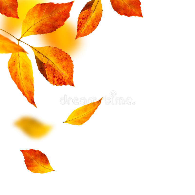 Hojas del otoño en el fondo blanco imagenes de archivo