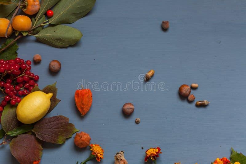 Hojas del otoño y frutas amarillas y rojas en un fondo gris fotografía de archivo