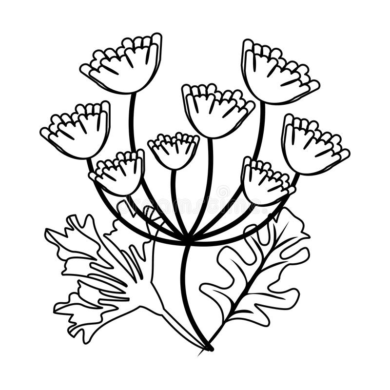 Hojas del perejil y del coriandro en blanco y negro ilustración del vector