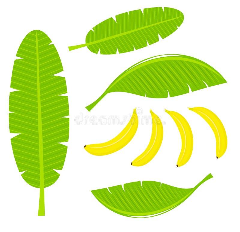 Hojas del plátano libre illustration