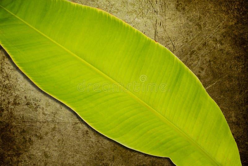 Download Hojas del plátano imagen de archivo. Imagen de salud - 42442541