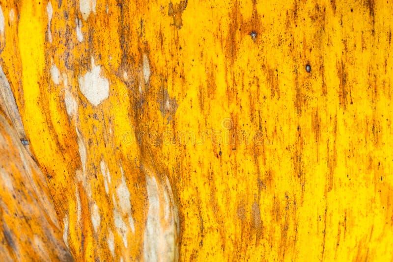Hojas del plátano de los modelos y de las texturas, verde, amarillo colorido y seco Primer del fondo f selectiva del extracto de  imágenes de archivo libres de regalías