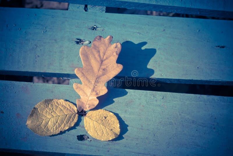 Hojas del roble de la caída en retro azul fotos de archivo libres de regalías