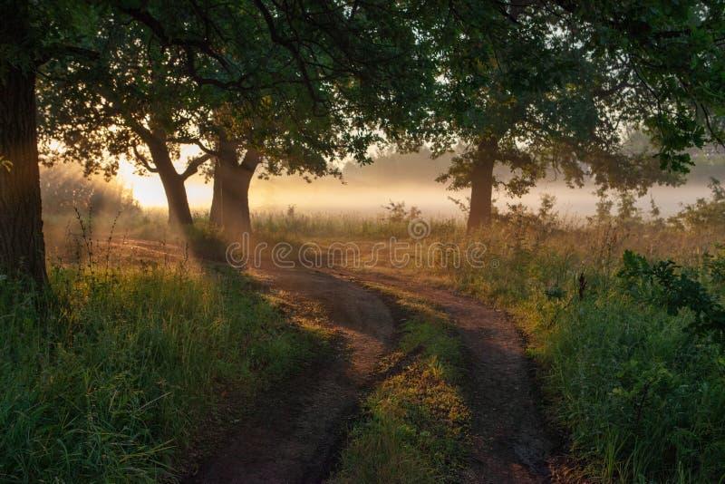Hojas del roble en la luz de la mañana con luz del sol Salida del sol en el campo imagen de archivo libre de regalías