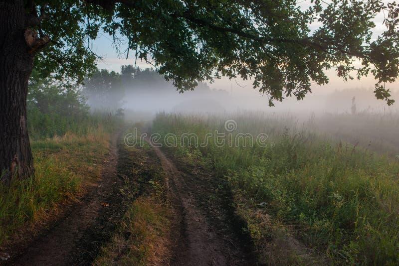 Hojas del roble en la luz de la mañana con luz del sol Salida del sol en el campo foto de archivo libre de regalías