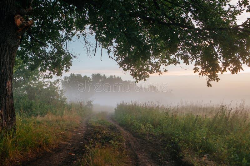 Hojas del roble en la luz de la mañana con luz del sol Salida del sol en el campo fotografía de archivo