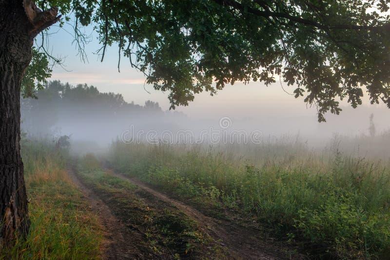 Hojas del roble en la luz de la mañana con luz del sol Salida del sol en el campo imagen de archivo