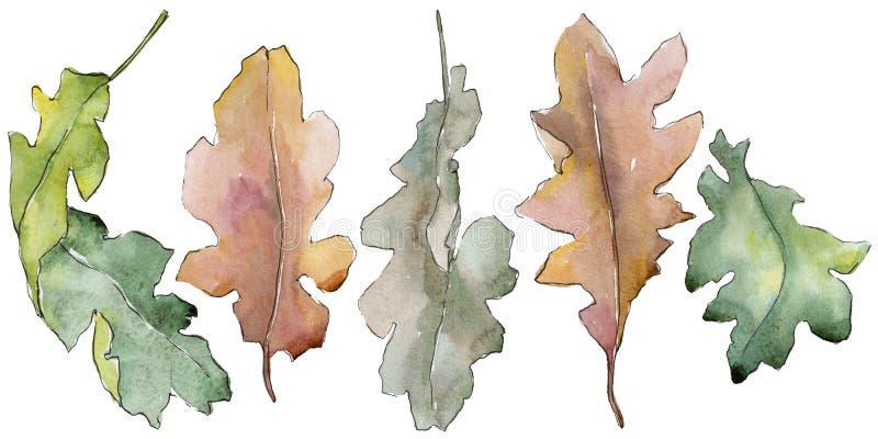 Hojas del roble en un estilo de la acuarela aisladas libre illustration