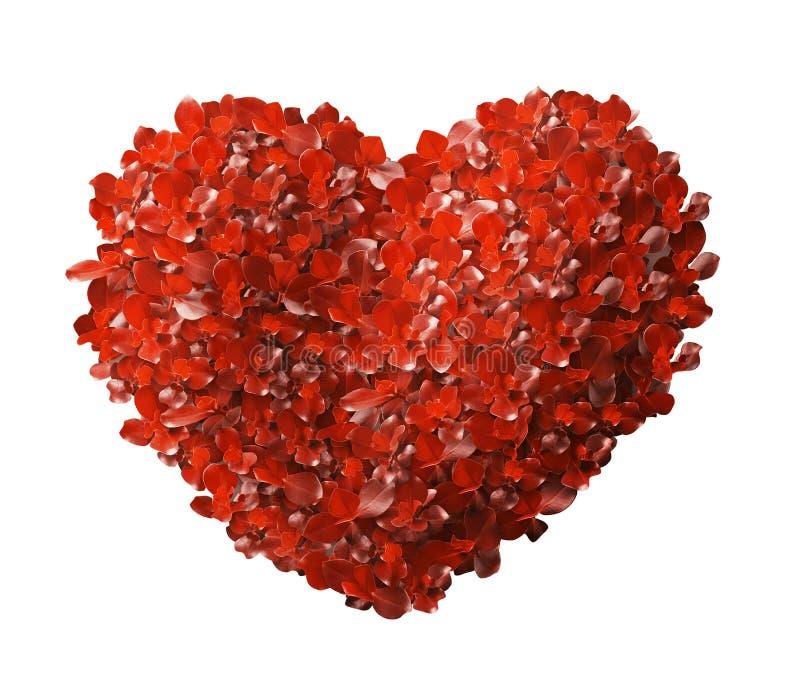Hojas del rojo en forma del corazón foto de archivo