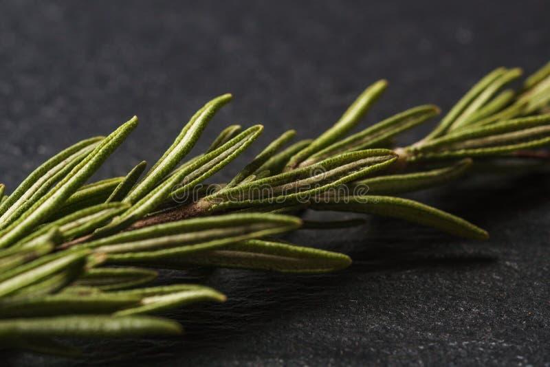 Hojas del romero en un fondo oscuro para cocinar Las hierbas de Rosemary se cierran para arriba imagenes de archivo