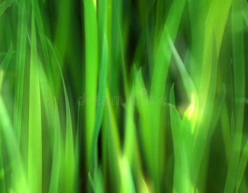 hojas del Suave-foco imagen de archivo libre de regalías